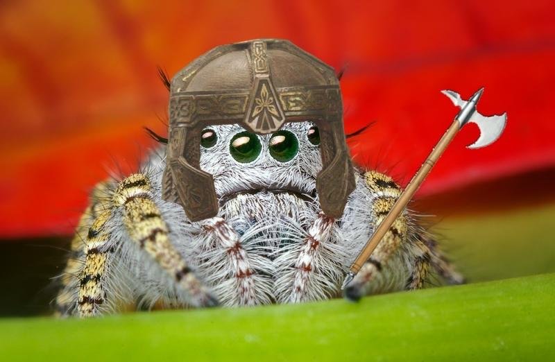 Прикольная картинка паука